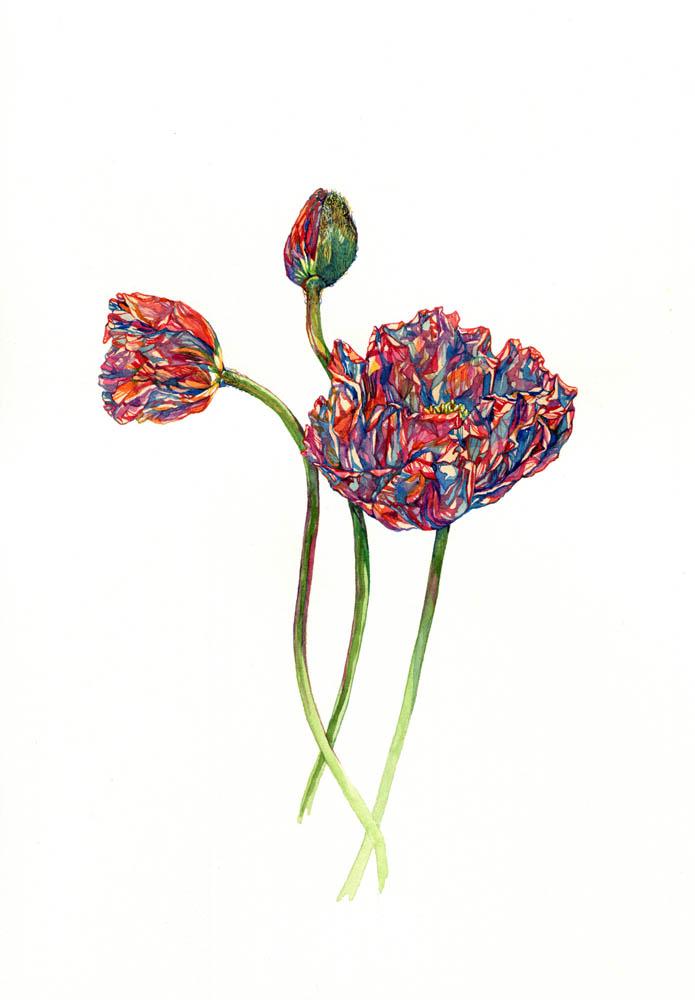 Three poppies, 2016.