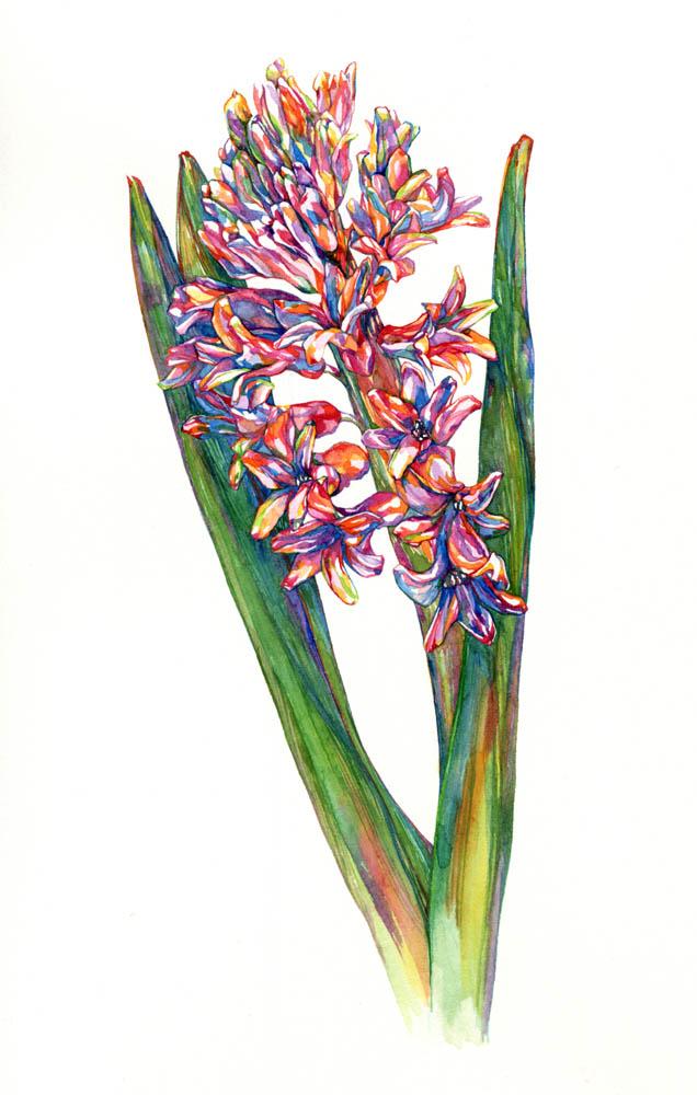 Hyacinth, 2016. SOLD