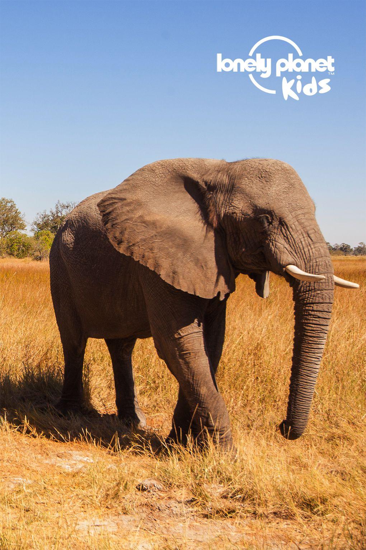 app_elephants_lp_1020x1530.jpg