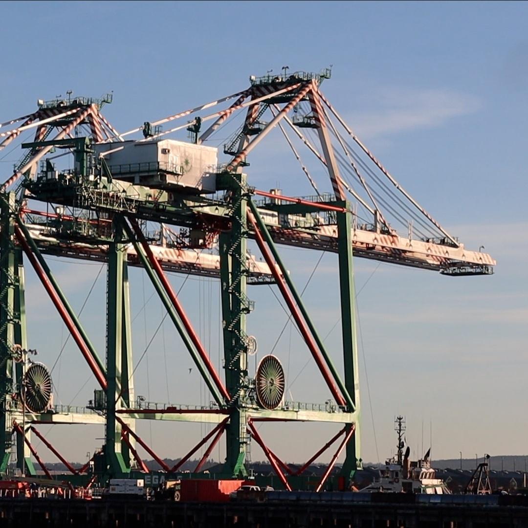 cranes+w-o+title.jpg