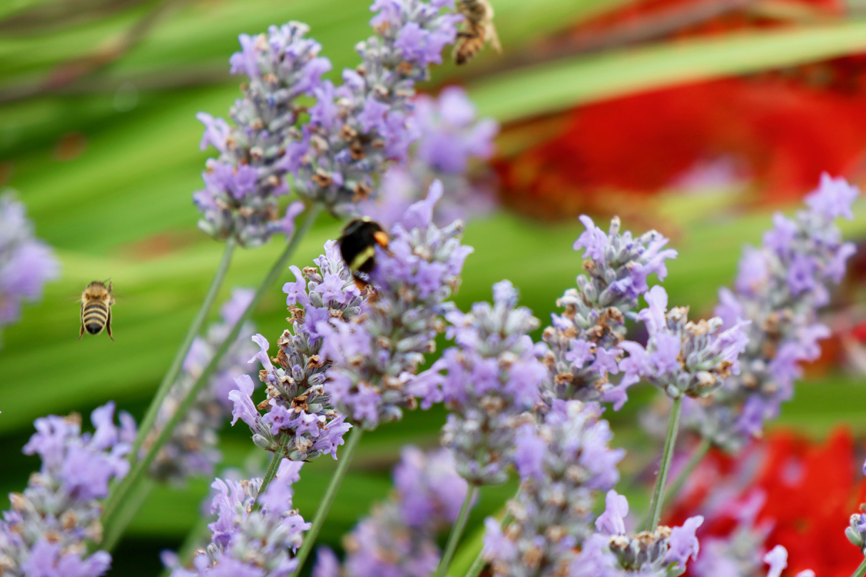 """Pea Patches are the place to """"bee"""" // Garret Hunt"""