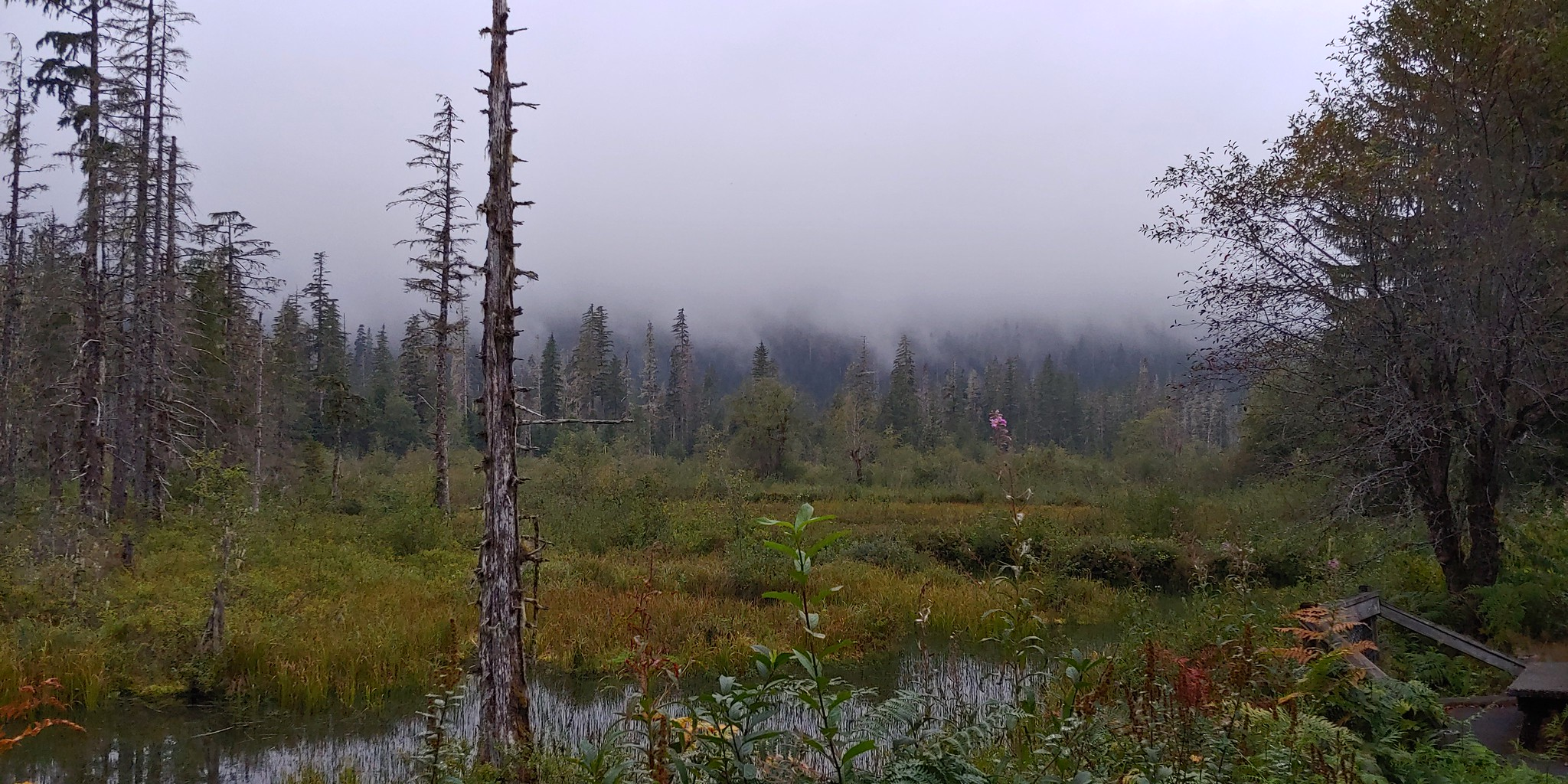 The wetlands as seen from the trail to the picnic area // Christopher Bragg