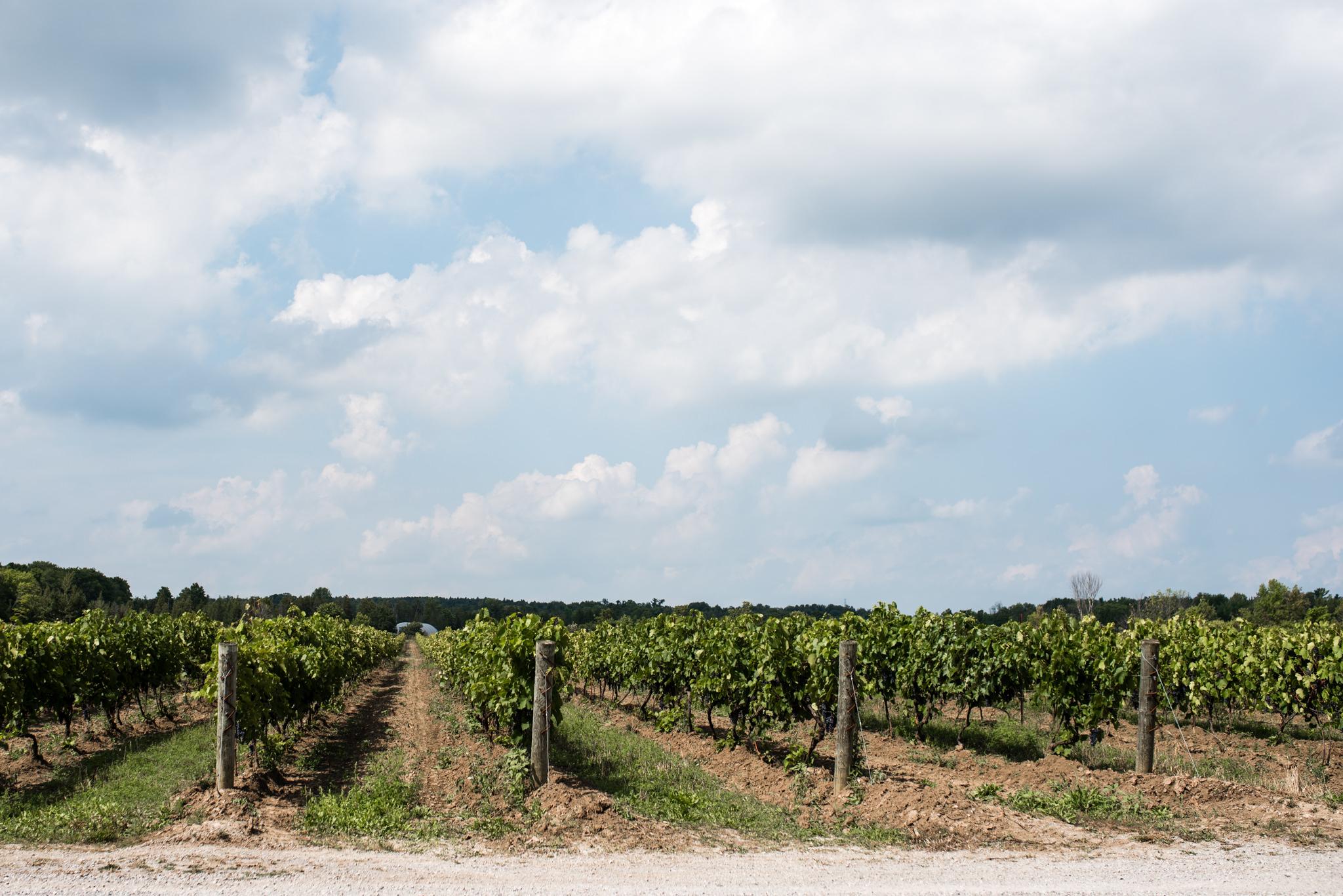 toronto-willowspring-winery-wedding-photographer-2