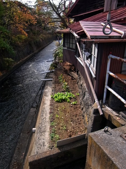 A tiny home garden found between Miyagawa River and a house.