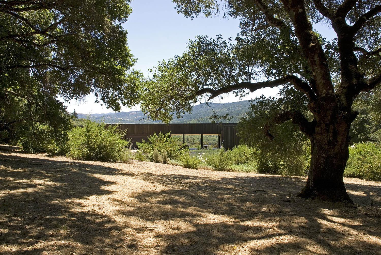 Oak tree view.jpg