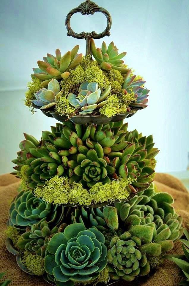 Succulent Garden.jpg