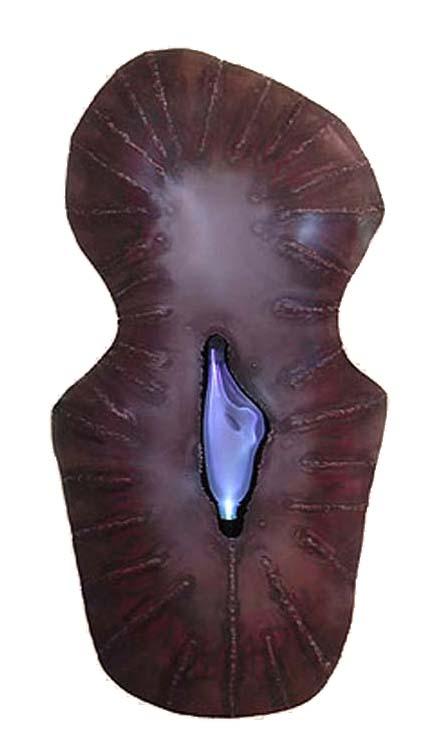 Hopi Shield