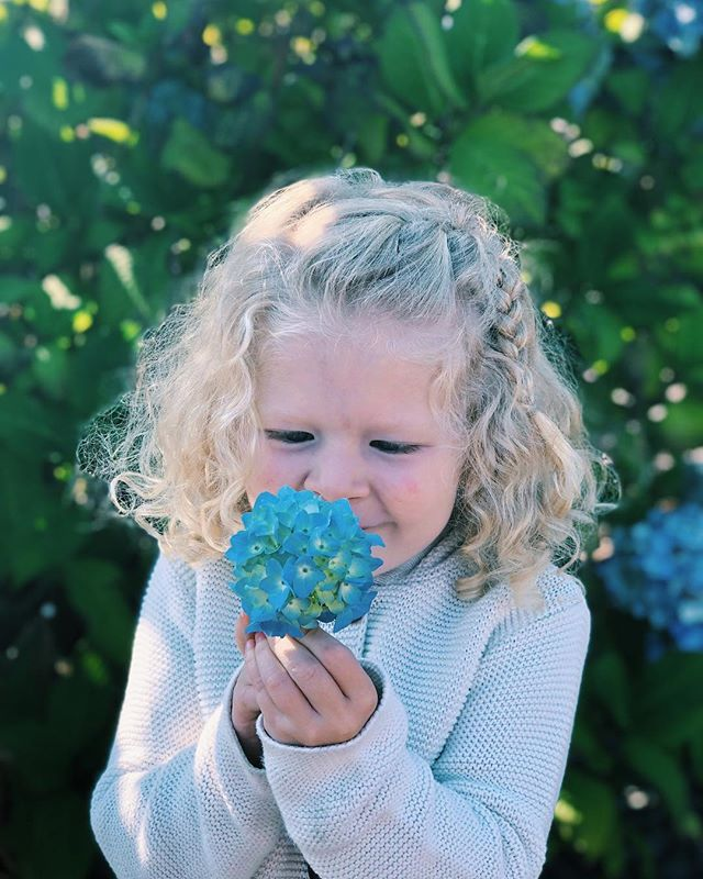 """She loves flowers and babies, bugs and dirt, fancy shoes and no shoes, sparkles and beaches, getting messy and getting dressed up, """"working out"""" and reading """"quiet time."""" She's my favorite four-year-old in the whole world. 💙 (Also, these hydrangeas really are this blue!)"""