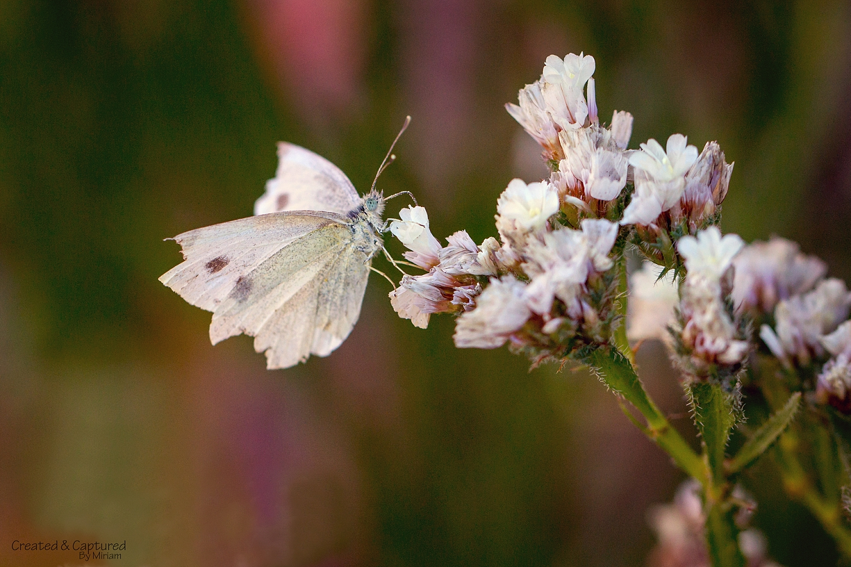 White Moth on Flower