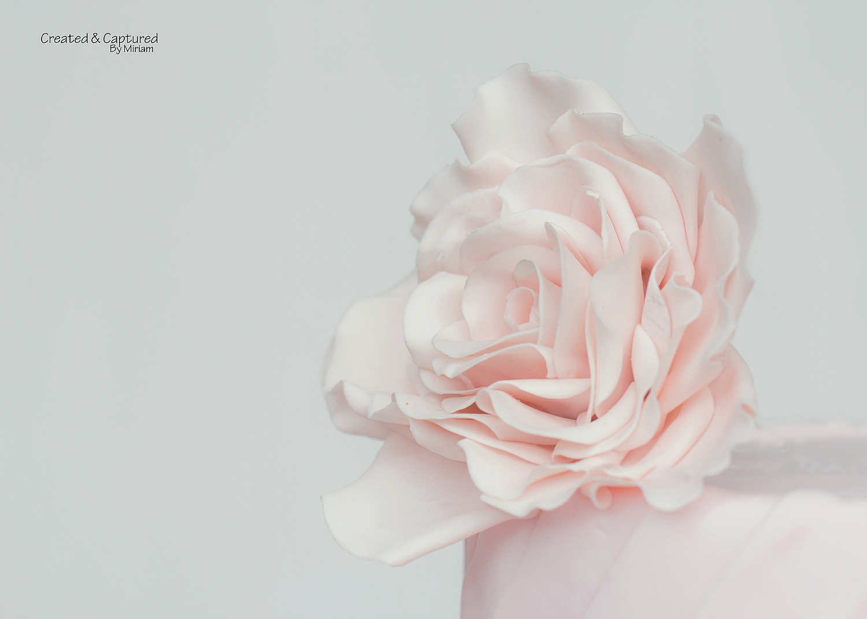 Pink Gumpaste Flower