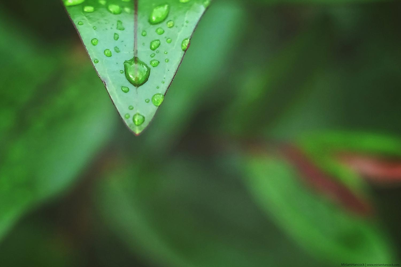 Raindrop On Leaf M01