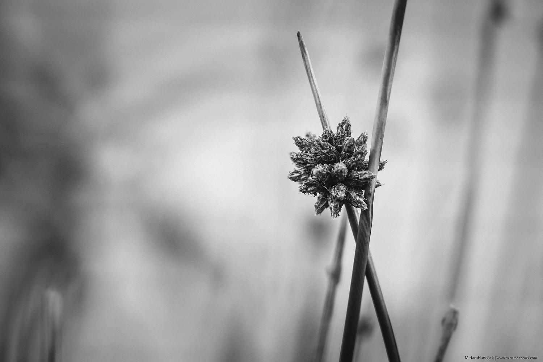 Grass M02