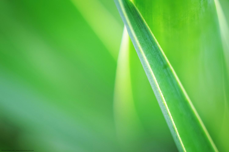 Yucca Leaves M02