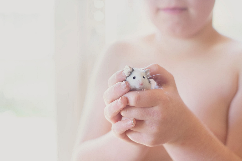 Dingle Mouse