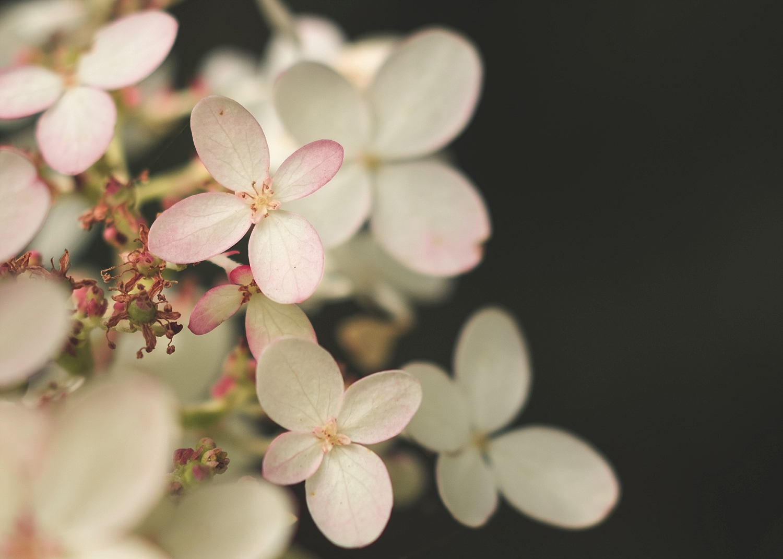White Petals F01
