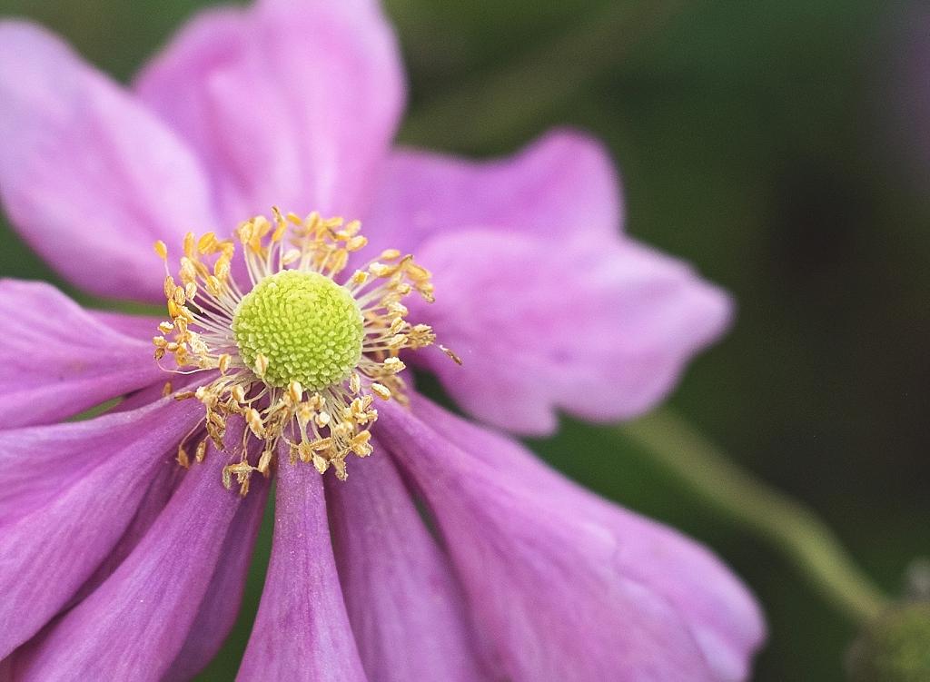 Purple Flower F02