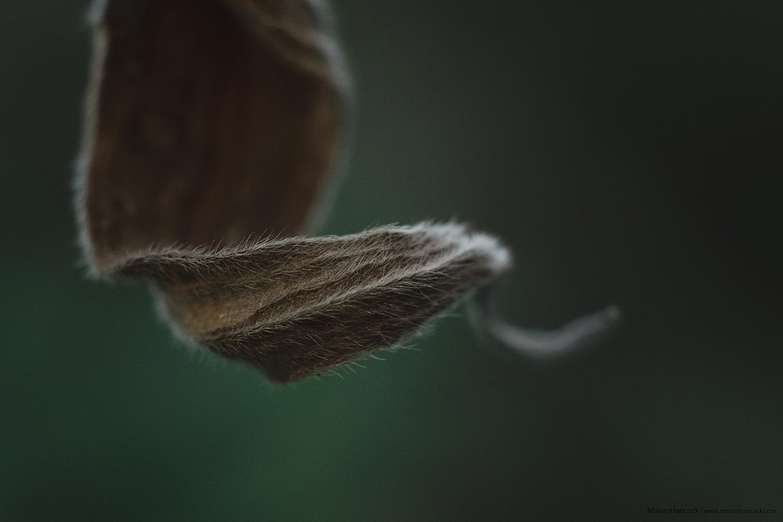 Dead Leaf M01