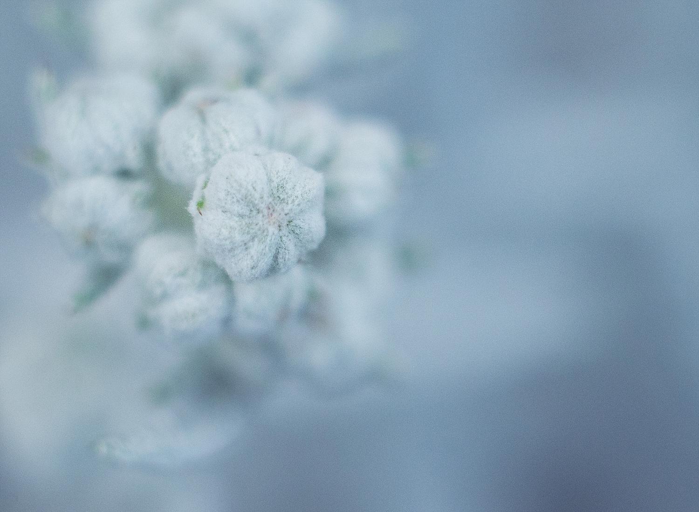 Winter Macro 01