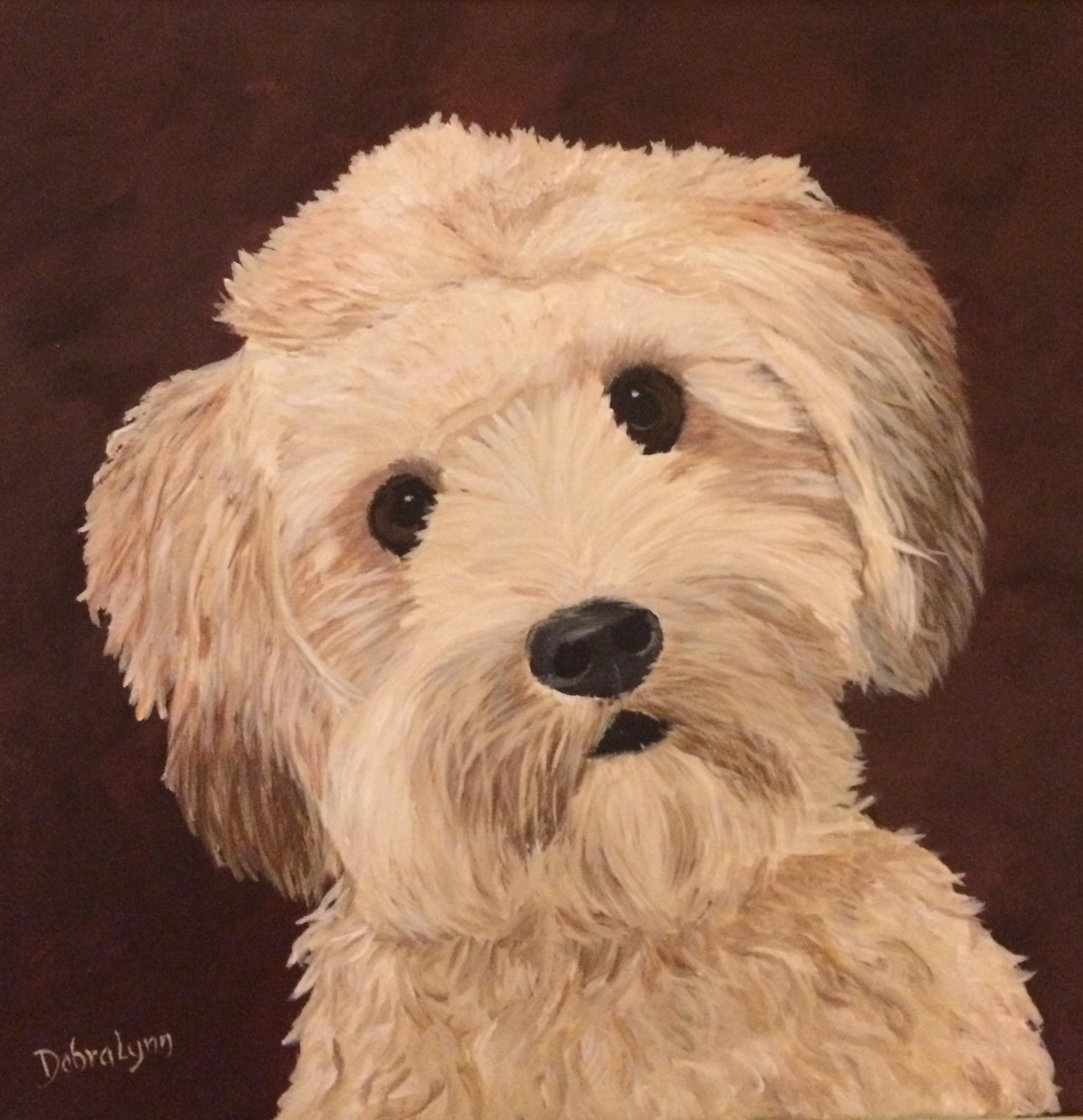 Asher - Havanese / Wheaton Terrier