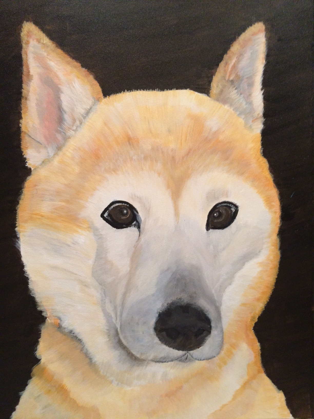In memory of Patches.. My Shiba Inu