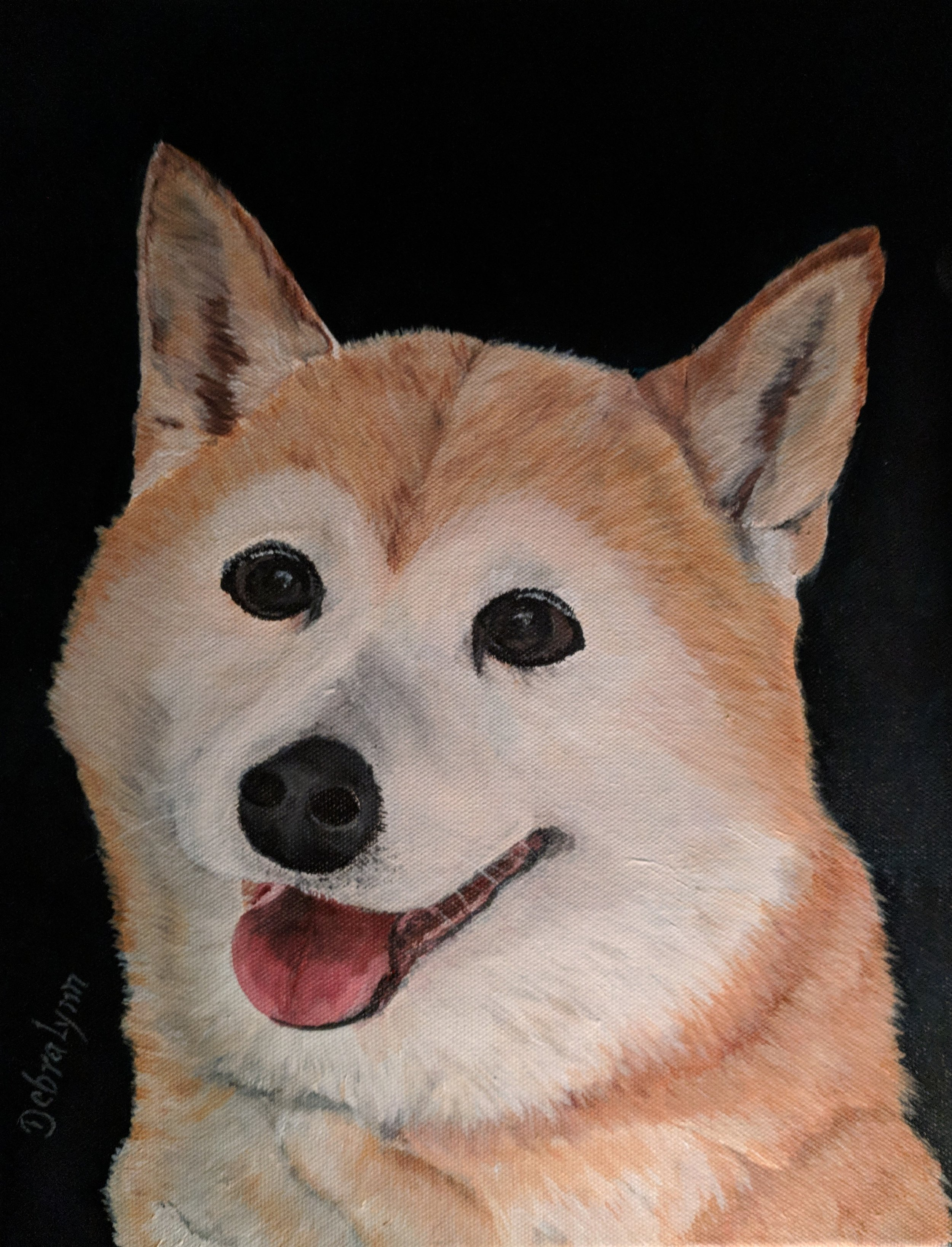 Patchy.. my beautiful Shiba Inu