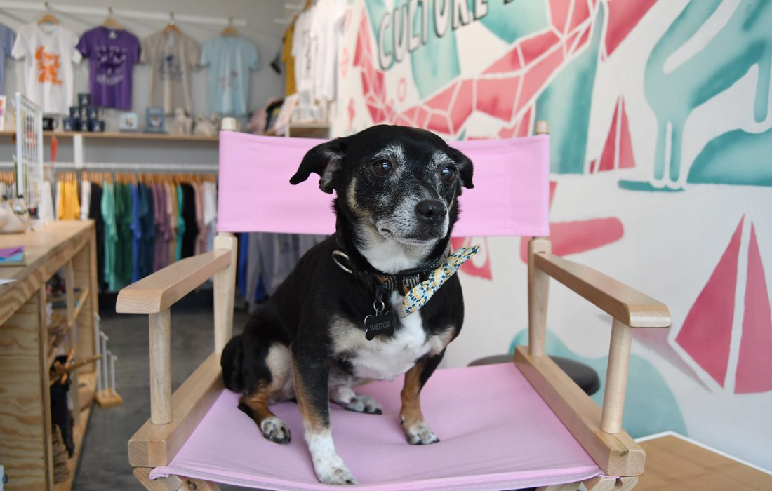 Photo by Ettie Berneking Wedge is a moody 8-year-old rat terrier chihuahua blend that adds to Culture Flock's eccentricity.  Purchase Photo