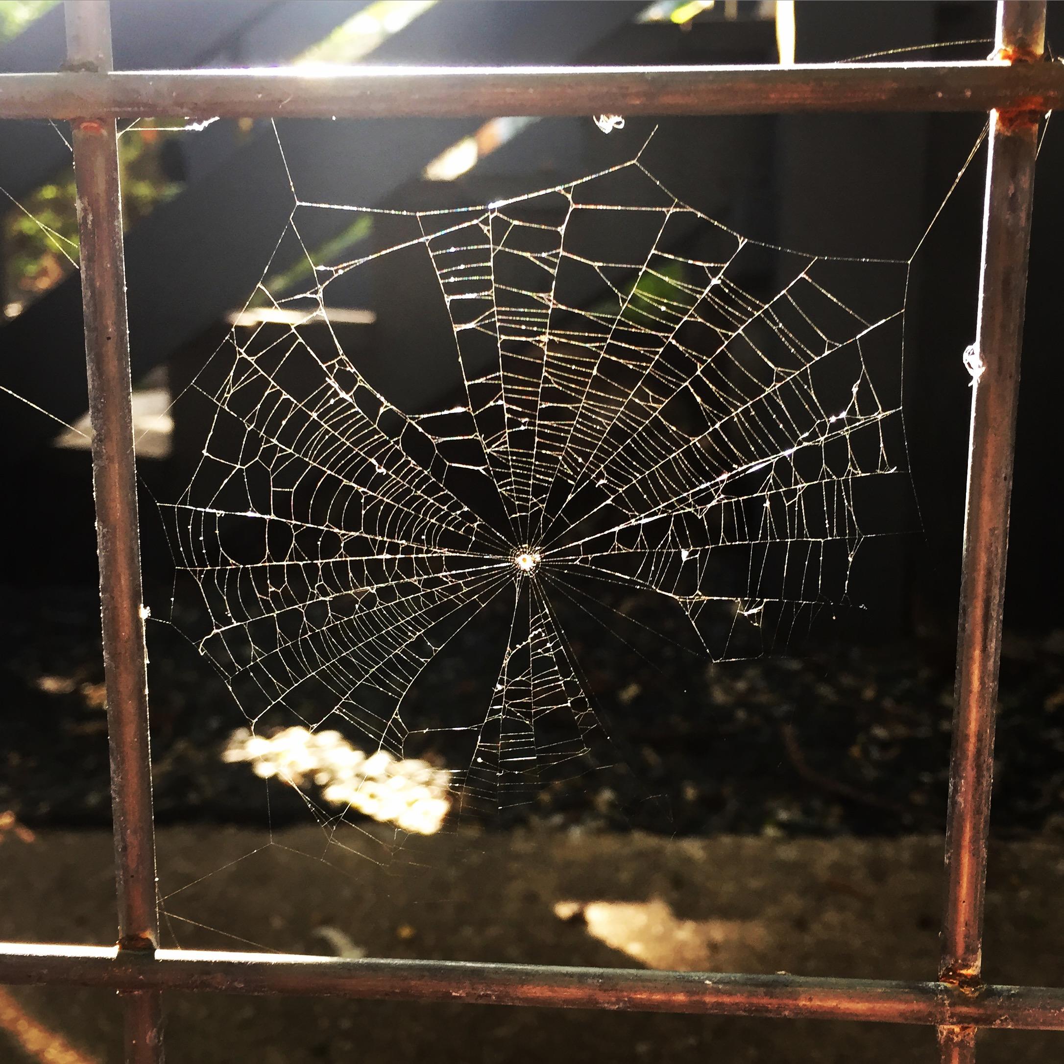 spiderweb_sunlight_simple_beauty