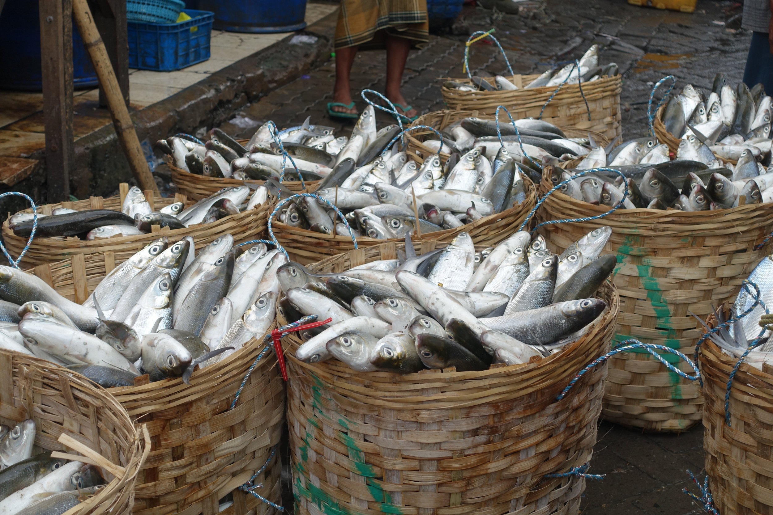 surabaya-fish-market-baskets.JPG