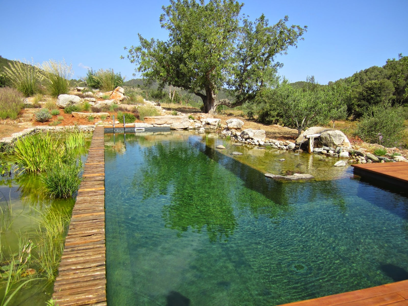 Biotope Pools Schwimmteiche Budwell Creations