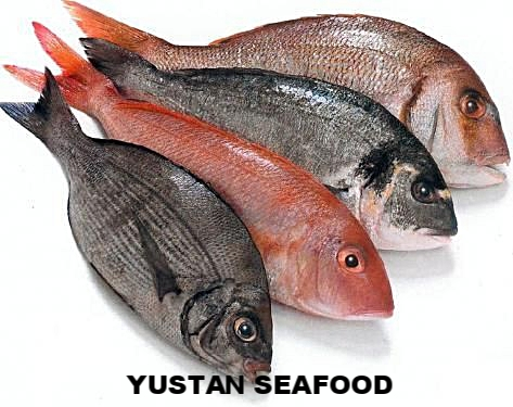 our products are categorized into three: - Fresh with iceFrozen IQFFrozen value-addedOur core products are SHELLFISH,lobster-tail, white shrimp, followed closely by PELAGIC fish, Yellowfin Tuna, Mackerel, Spanish Mackerel, and DEMERSAL fish, grouper and snapper.