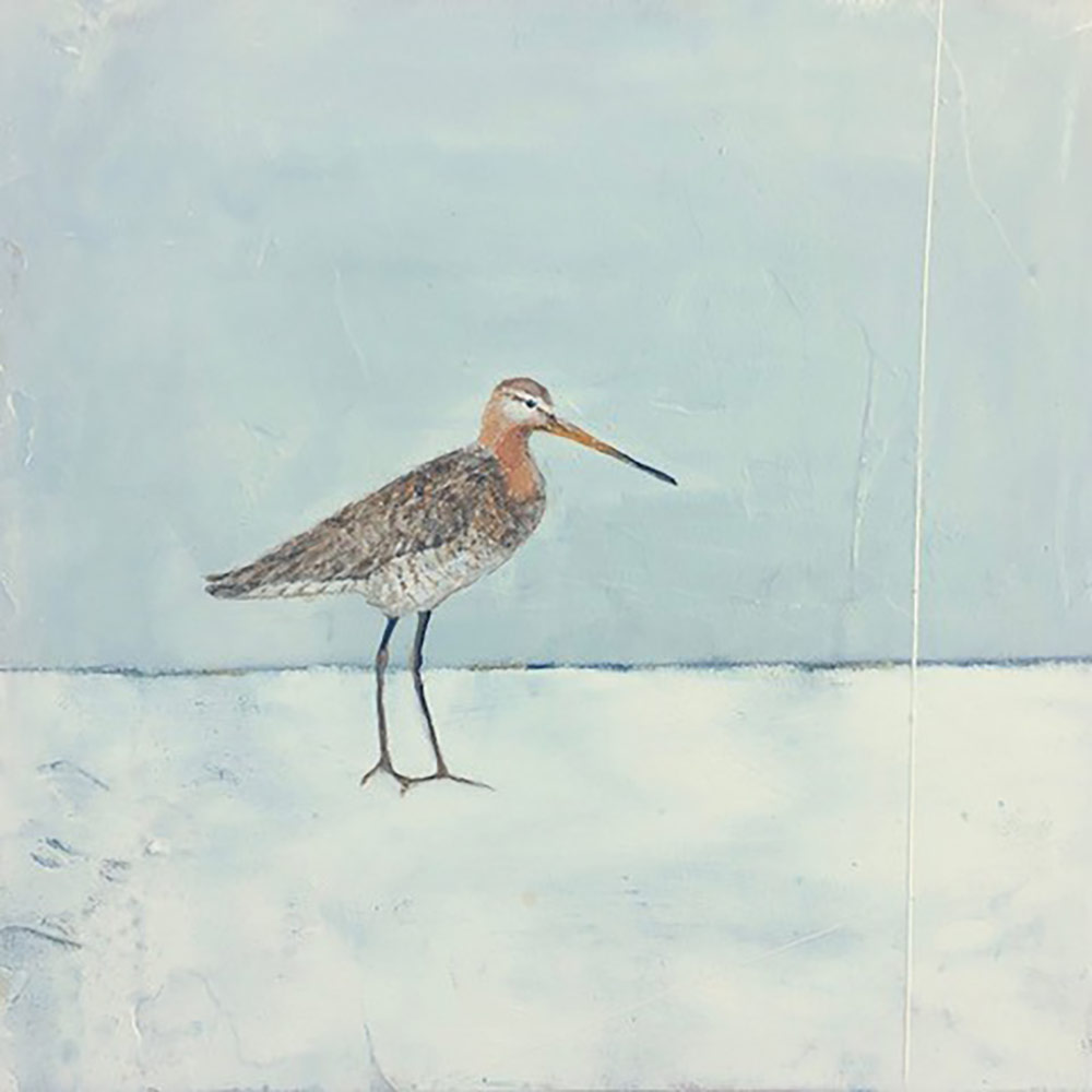 Jane-Skingley-Coastal-Bird-4-Snipe-Oil-on-board-30-x-30cm.jpg