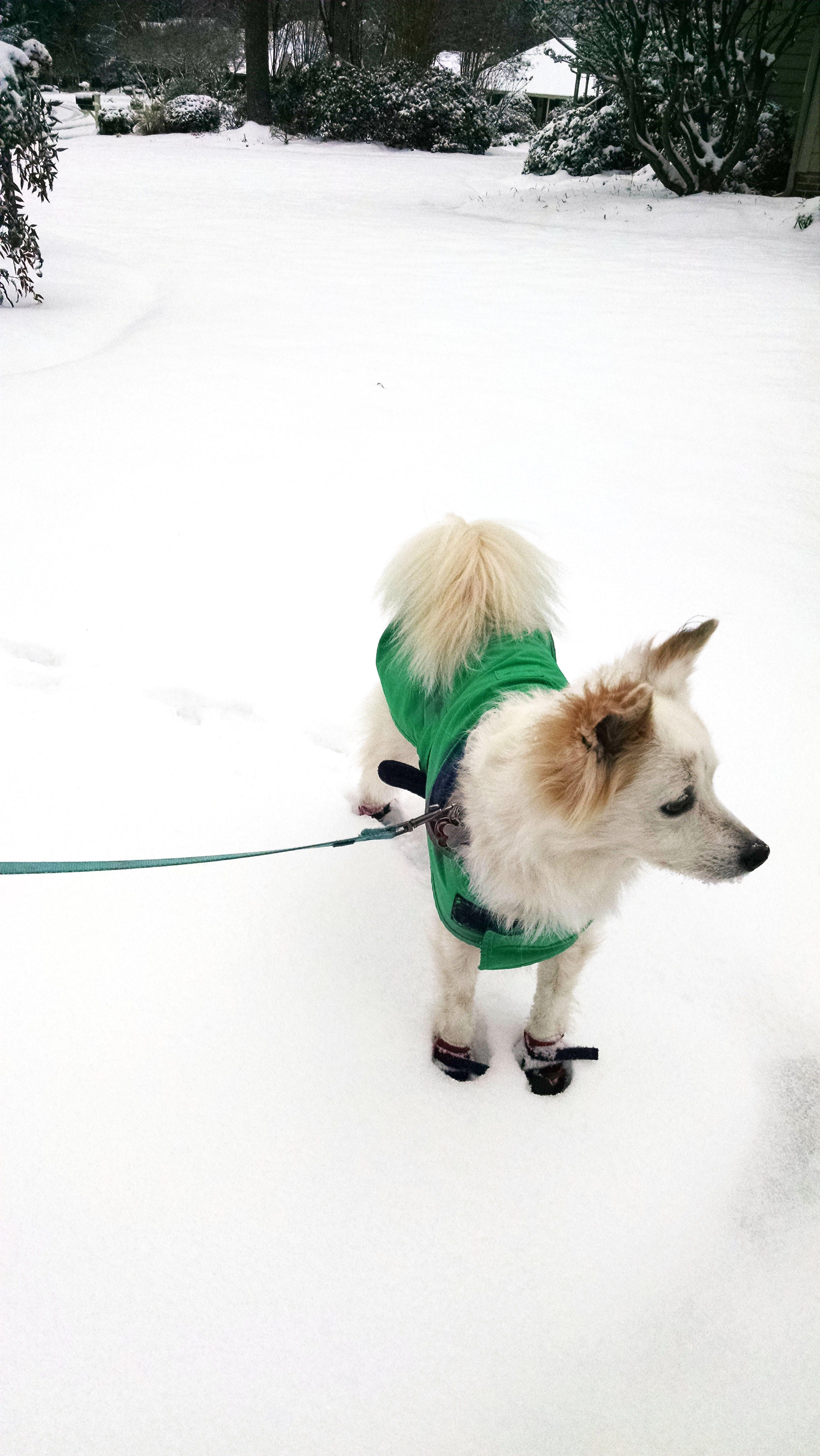 Ribi the Snowdog.jpeg