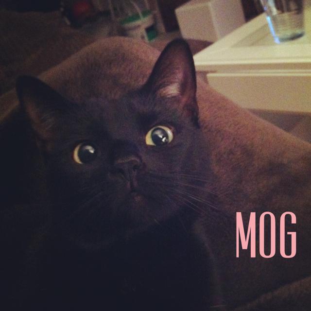 Mog.PNG