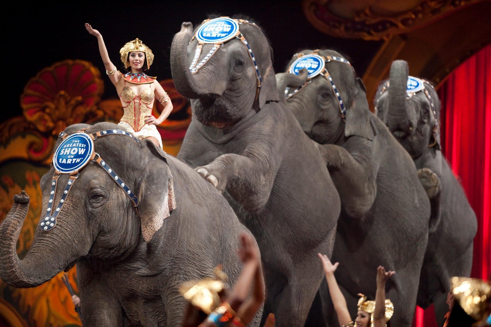 ringling-brothers-circus-elephants-3-5-15.jpeg