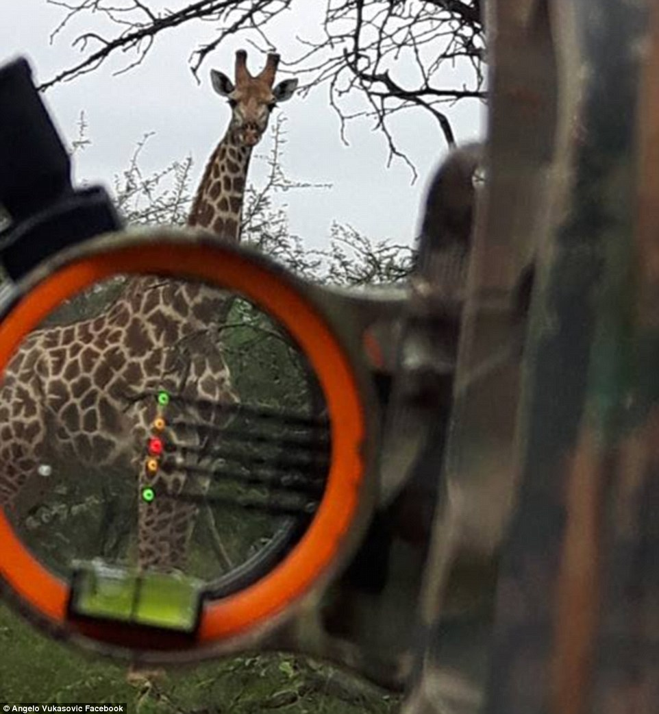 358332A900000578-3652343-This_image_shows_a_giraffe_completely_unaware_he_is_in_the_cross-a-8_1466595307265.jpg