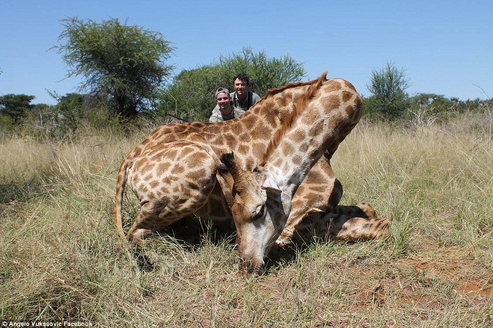 358332E200000578-3652343-Vukasovic_pictured_here_with_a_dead_giraffe_said_its_meat_was_th-a-3_1466595082590.jpg