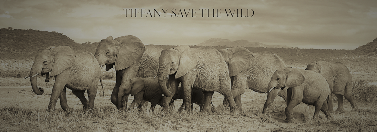 Tiffany Save the Wild Campaign.png