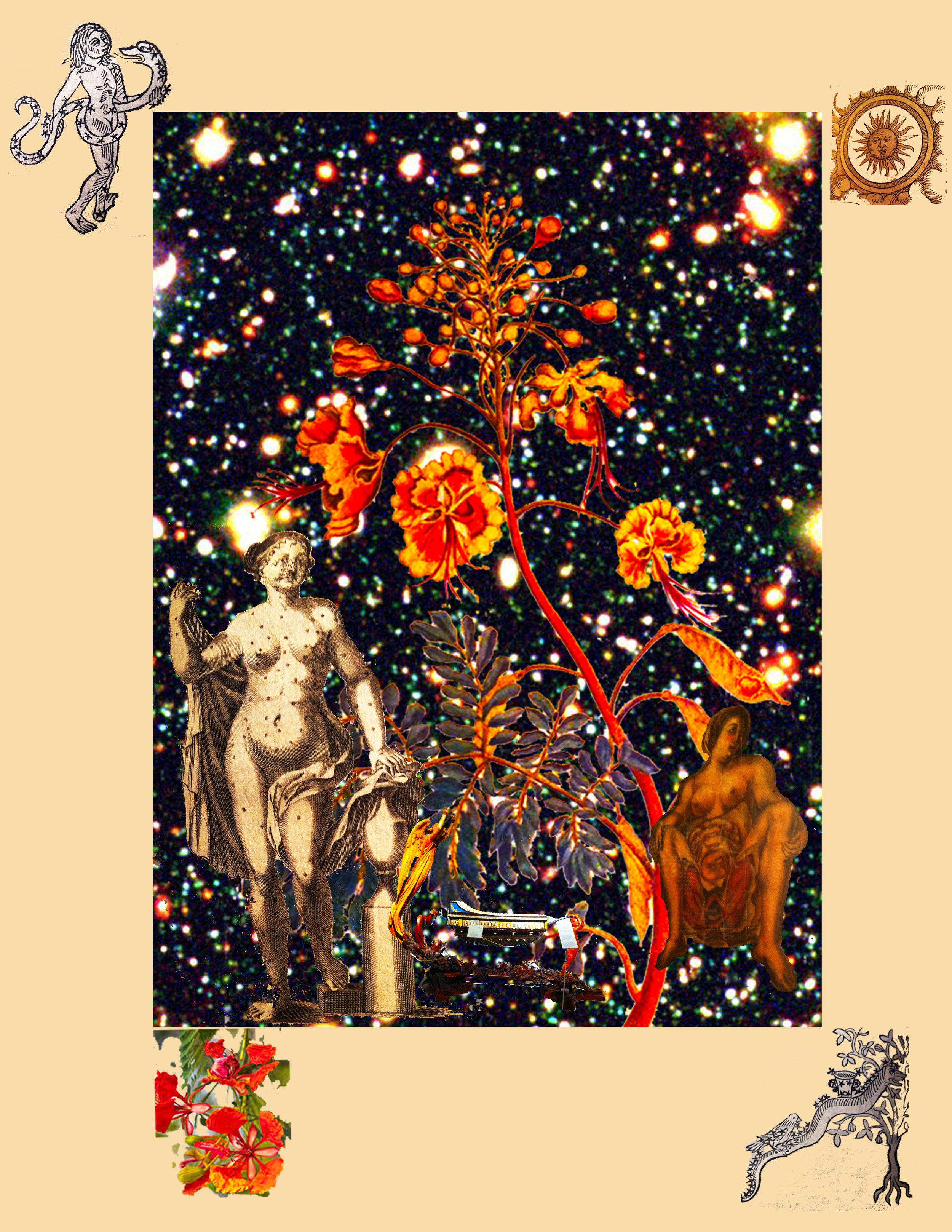 'Flowering Pavonis female edge' by C Bangs Brooklyn, New York