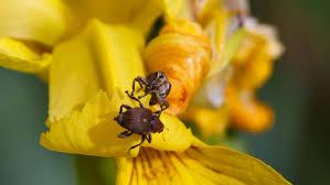 honey bee on flower.jpg