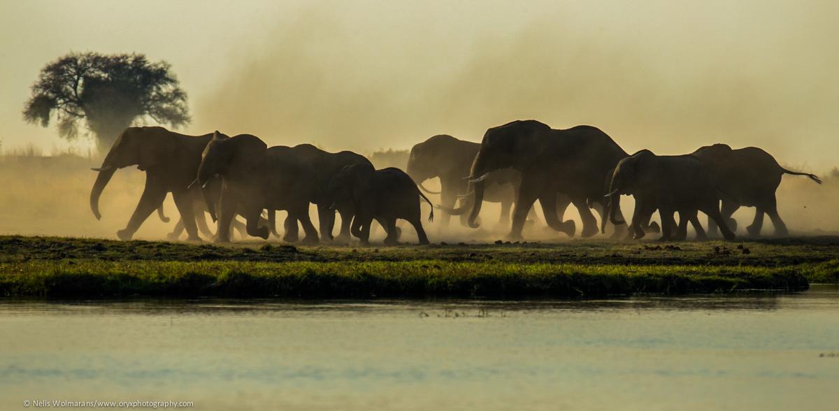 Private Photo Safari: Chobe National Park, Botswana via  Oryx Worldwide Photographic Expeditions .
