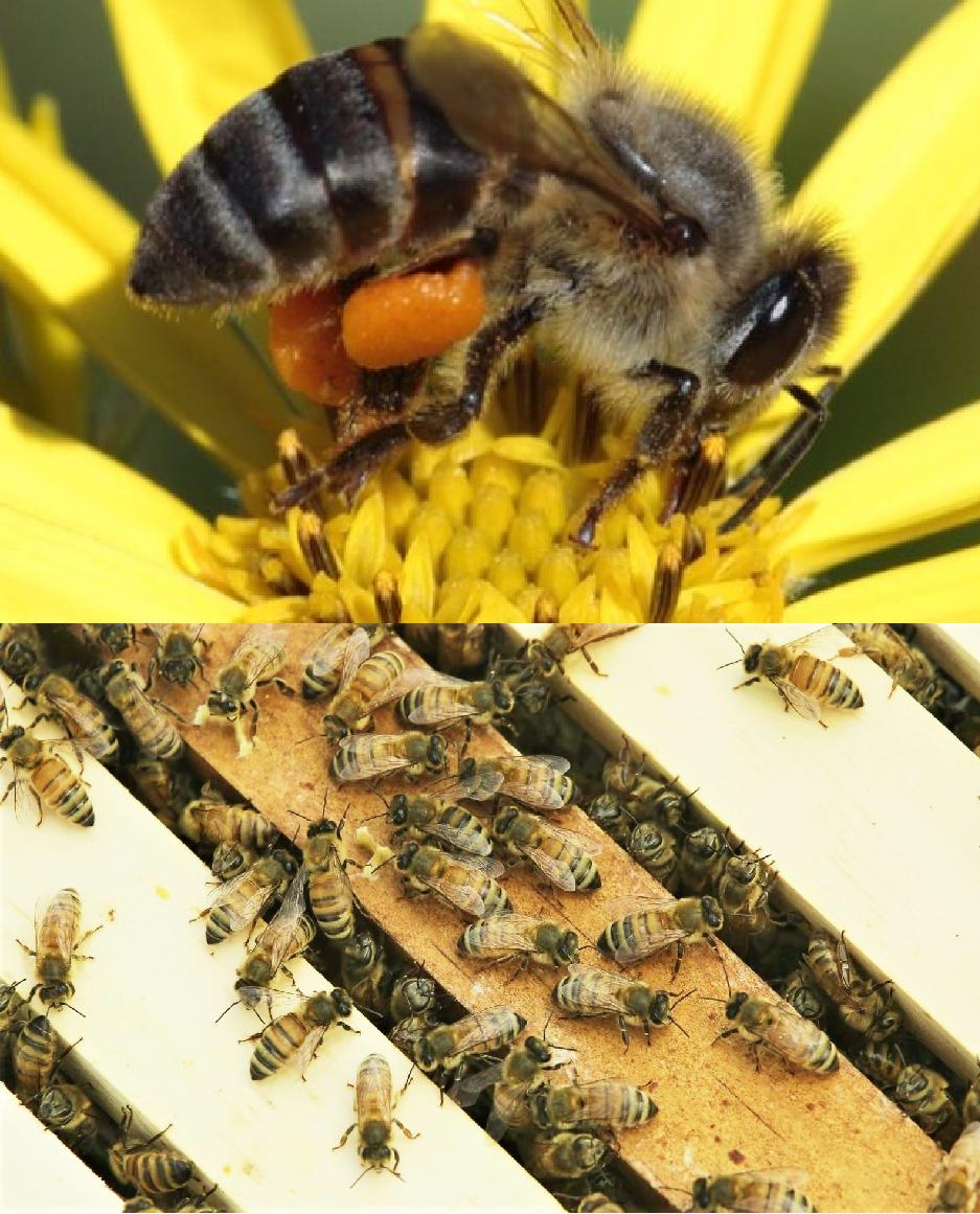 1 million bees die in South Africa.jpg