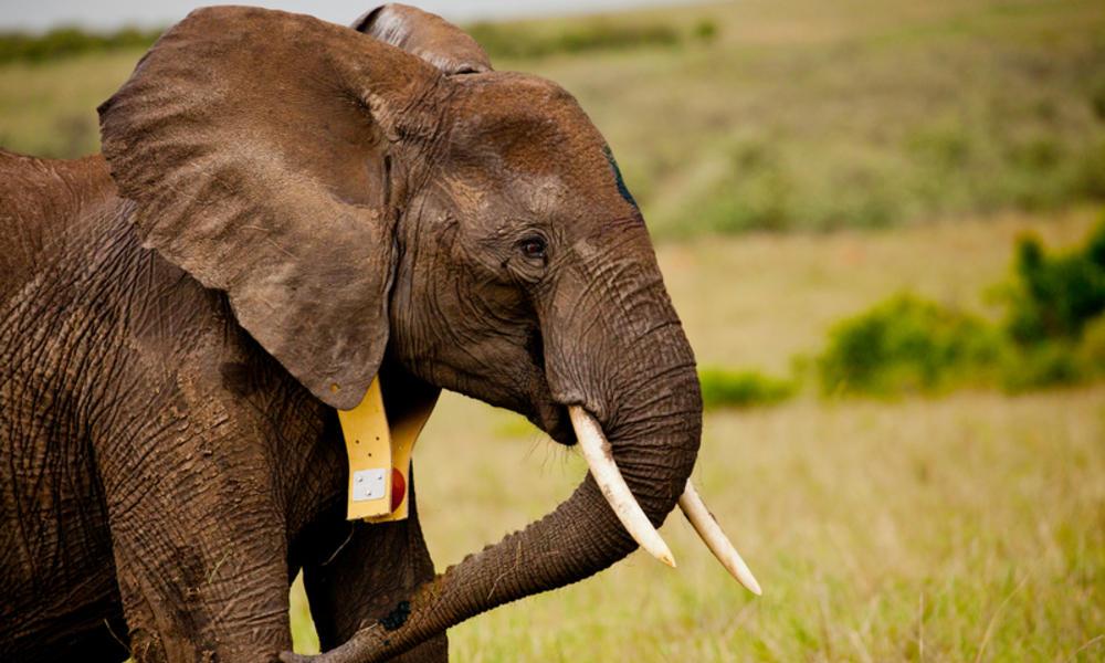Image via WWF : World Wildlife Fund