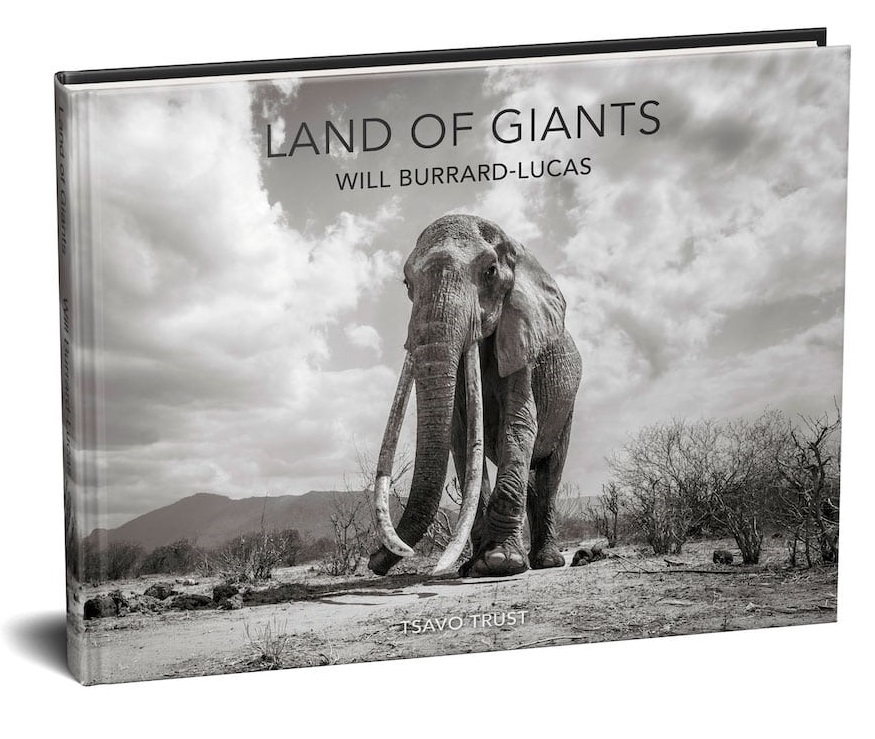 will-burrard-lucas-elephant-queen-land-of-giants-book- (10).jpg