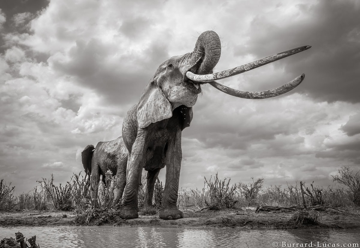 will-burrard-lucas-elephant-queen-land-of-giants-book- (6).jpg
