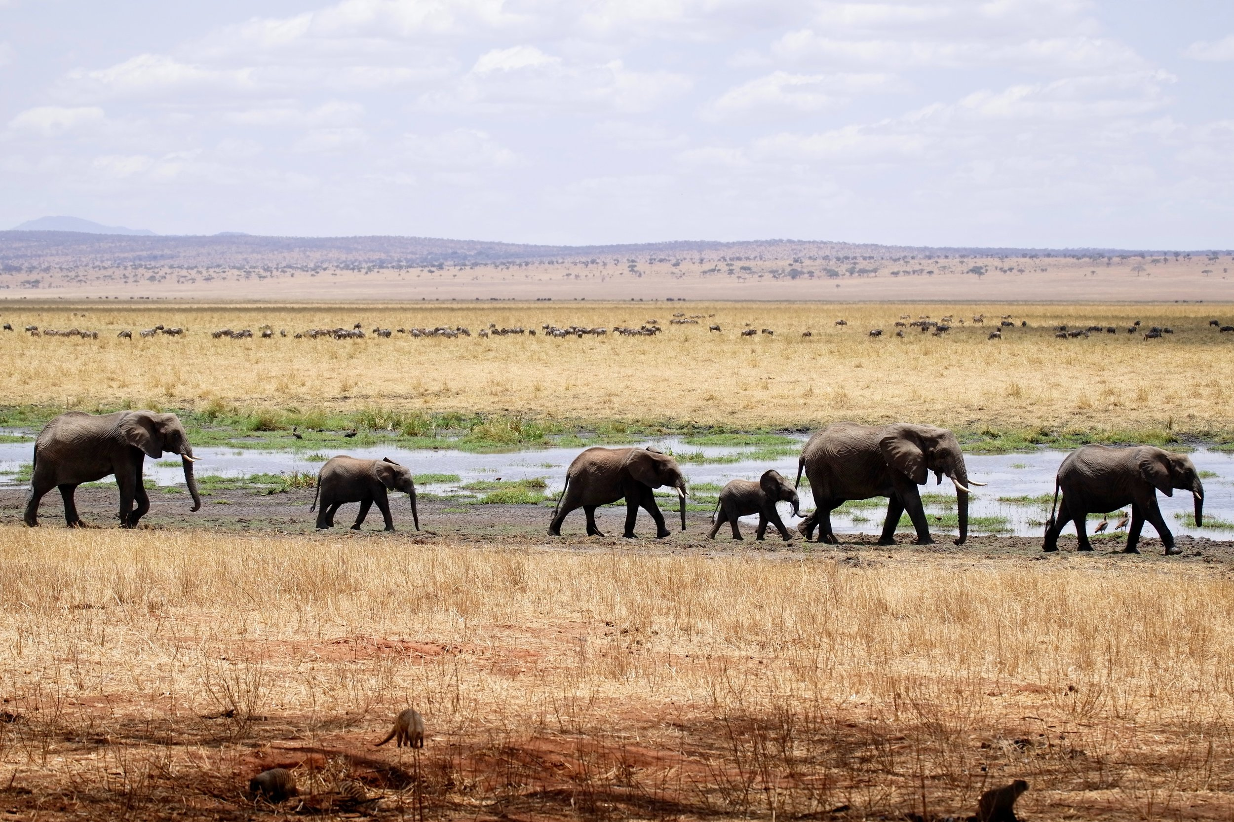 Tarangire National Park, Arusha, Tanzania Photo by  ray rui  on  Unsplash