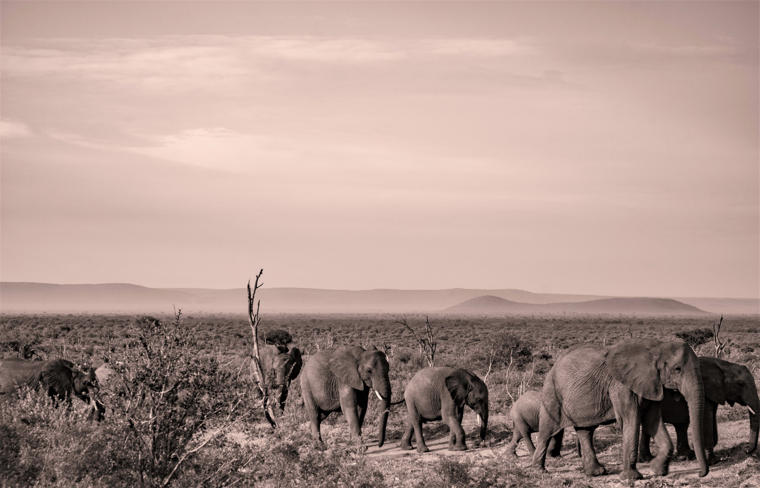 Madikwe, South Africa. Photo by  Andrew Rice  on  Unsplash