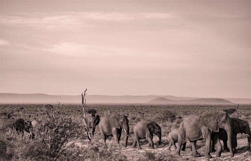 Madikwe, South Africa .jpg