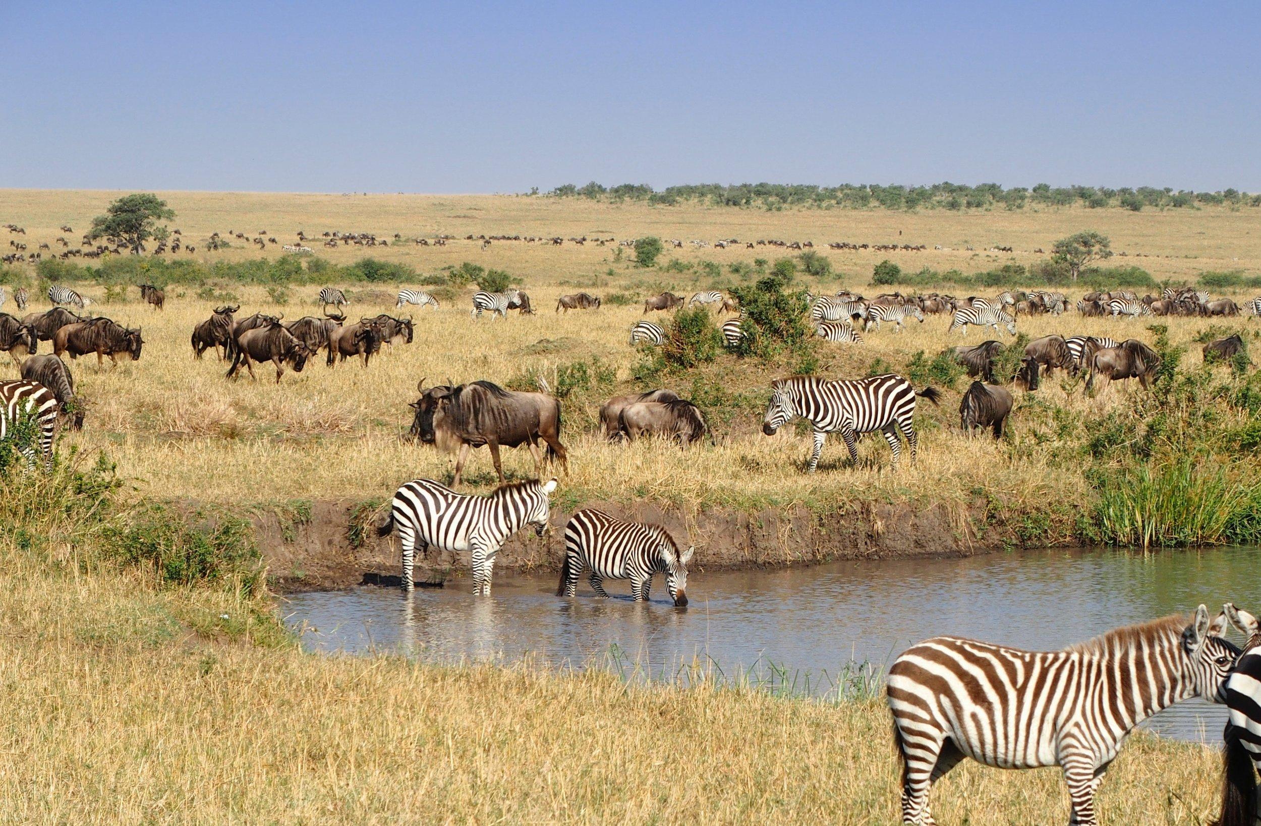 Masai Mara, Africa. Photo by  Michael Rodock  on  Unsplash