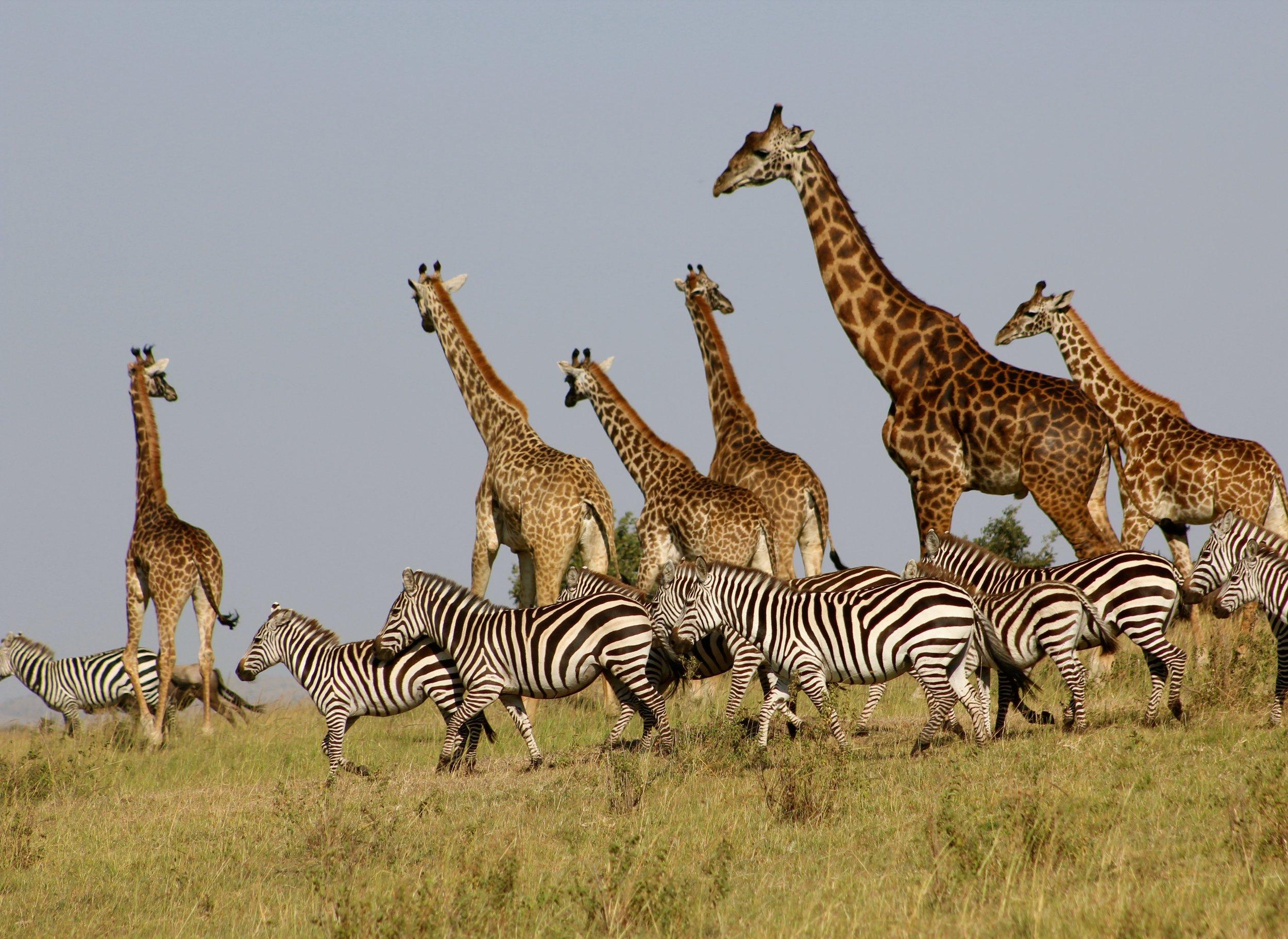 Maasai Mara, Kenya. Photo by  Heather M. Edwards  on  Unsplash