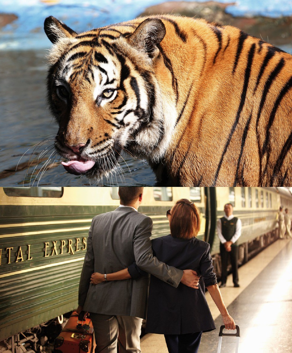 The six-day, five-night 'Tiger Express' – a special trip organised aboard Belmond's luxury train, the Eastern & Oriental Express – will pass through the tiger's traditional habitat as it travels from Bangkok to Singapore and help to raise awareness about endangered big cats.
